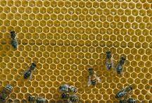 Bee farming / by Amanda Senff