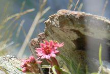 Fleurs des Pyrénées-Atlantiques