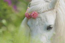 paarden♥