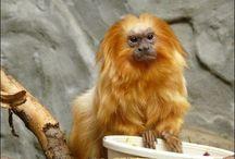 Редкие и необычные животные нашей планеты / Редкие и необычные животные нашей планеты