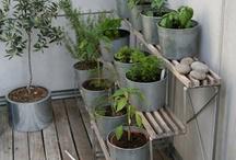 Dream Balcony Herb Garden
