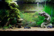 top aquariums