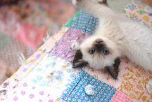 Sweet cat ⊰✿¸.•*ღ¸