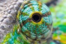 Ojos d animal