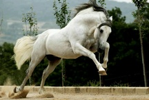 """Horses  and animals of all kinds / """"When I look into the eyes of an animal I do not see an animal. I see a living being. I see a friend. I feel a soul."""" by A. D. Williams"""