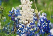 Texas / by Linda Baze
