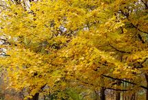 fall / by Annetta Gregory