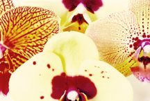 Party Orchids / Without orchids it wouldn't be a party