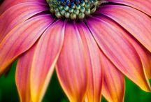 Flower / Plant.