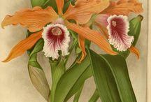 Z orchids.....
