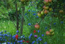 Veggie garden ideas / Ideas for the garden by the pond