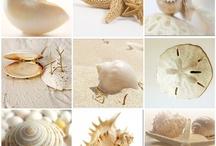 Shell's whisper