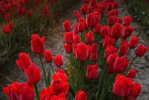 Nature / Természet,virágok