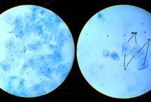 Células vistas de um microscópio optico / Trabalho de Biologia