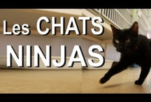 Cat Videos 1 / by Carolyn CS
