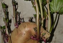 Zöldség kertészet