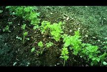 Tuinen en zelf groenten zaaien!