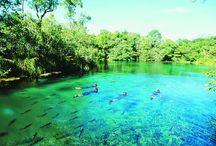 Bonito - Mato Grosso do Sul - Brasil / Bonito é um município brasileiro da região Centro-Oeste, situado no estado de Mato Grosso do Sul. Pólo do ecoturismo em nível mundial, suas principais atrações são as paisagens naturais, os mergulhos em rios de águas transparentes, cachoeiras, grutas, cavernas e dolinas. Juntamente com Jardim, Guia Lopes da Laguna e Bodoquena, é o principal município que integra o complexo turístico do Parque Nacional da Serra da Bodoquena, apresentando grande potencial turístico.