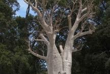 Plants of Australia