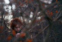 fiddle oak