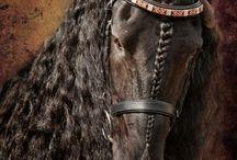 Ilyen lovam lesz