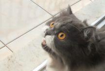 Luna & perigo ❤️ / Gatinhos