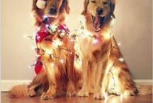 Christmas Card Photo Ideas / by BeckiLG