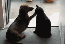 vicces állatok
