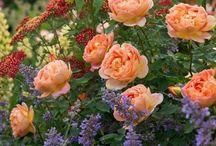 kytky oboje