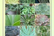 Pozsgások / Pozsgás növényekről