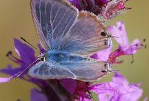 beautifull flower or butterfly,s