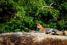Attractions of Sri Lanka
