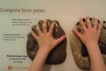 Łapy niedźwiedzia - eksponat