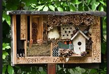 Pollinator Projects