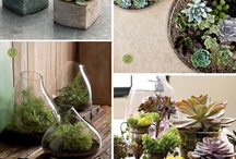 Container Garden / by Tammy Ezell