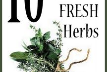 Fresh herb recipes / by Bethany Plummer