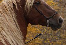 Horsey  / by Julie Garner