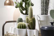 Cactus vibes / Cactus Cactus Cactus