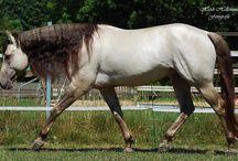 My dream horses