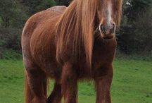 ❤️Horses❤️ / My beautiful horses / by Tiffany English