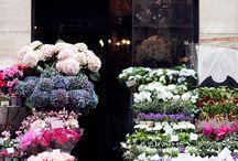 My flower shop))