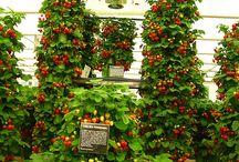 Gardening brilliance