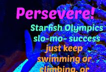 Perseverance / Just keep swimming