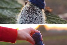 Hedgehogs and hedgehugs ♥️