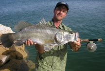 NILE PERCH / Nile perch fly fishing.  Nile perch on the fly.