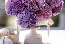 BLOOMS / Hydrangeas, peonies, tulips, violets and roses