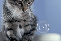 Chat / C'est toujours mignion un chat, non?