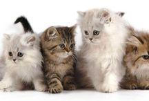 Animale de companie / Pets