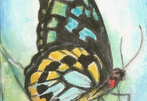 Butterflies ACEO Theme Week May 2012 Art Cards / A monthly, themed ACEO contest held by Art Cards, Editions and Originals group on eBay. Come, look and join the fun!