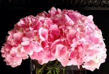Virágok - Flowers